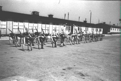 Presoners fent exercicis gimnàstics